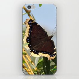 Mourning Cloak Butterfly Sunning iPhone Skin