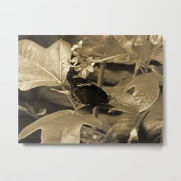 Sepia Butterfly On a Leaf Metal Print