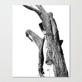 I'M A BEAR Canvas Print