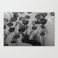 jelly fish Canvas Prints featuring jelly fish by anjastensrud