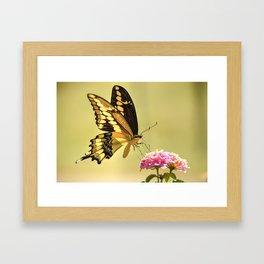 Giant Swallowtail Framed Art Print