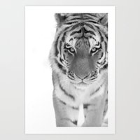 Bengal Stare Art Print