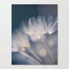 soft lights Canvas Print