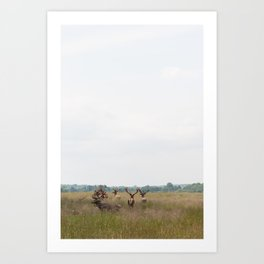 Deer in Dyrehaven Copenhagen Art Print