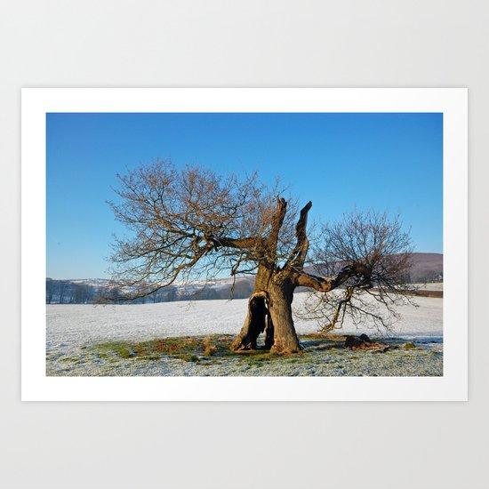 Old Oak Tree in Winter Art Print