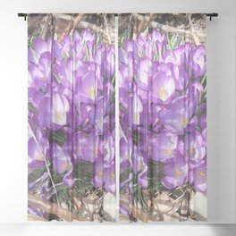 Watercolor Flower, Purple Crocus 01, Washington D.C., Spring Delights! Sheer Curtain