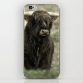 Highland Cattle III iPhone Skin