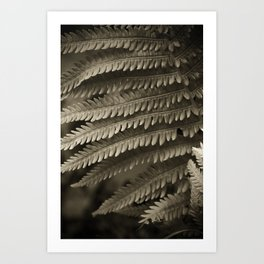 Copper-ized Ferns Fight for Sunshine Art Print