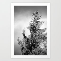 The Tree in the Wind Art Print