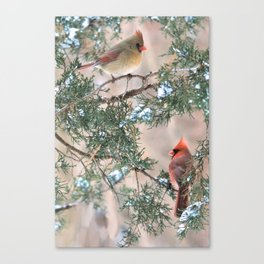 Winter Pair Cardinals (v) Canvas Print