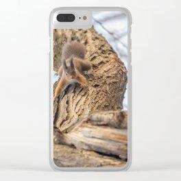 Red squirrel on tree trunk, Forest squirrel (Sciurus vulgaris) Clear iPhone Case