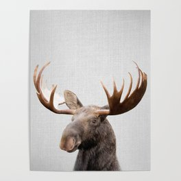 Moose - Colorful Poster