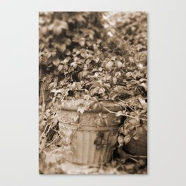 Old Tyme Plant Canvas Print