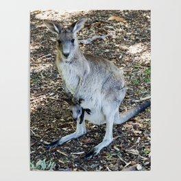 Eastern Grey Kangaroo with Joey Poster