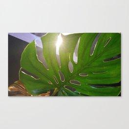 Shining leaf Canvas Print