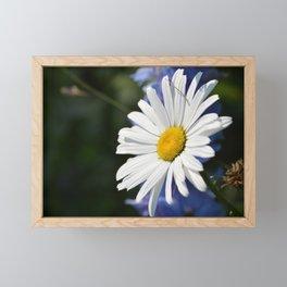 White Daisy Flower Loves Me Loves Me Not Framed Mini Art Print