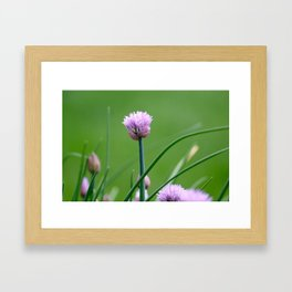 Macro Chive Blossoms 2 Framed Art Print