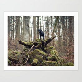 Top Dog Art Print
