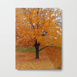 Trees Autumn ORANGE AND GOLD Metal Print