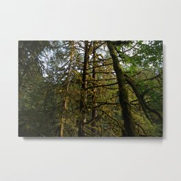 Golden Trees - Oregon Metal Print