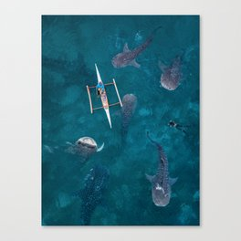 Swimming with whale sharks! Canvas Print