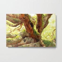 Angel Oak Color Series #2 Metal Print