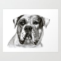 bulldog Art Prints featuring Bulldog by Danguole Serstinskaja