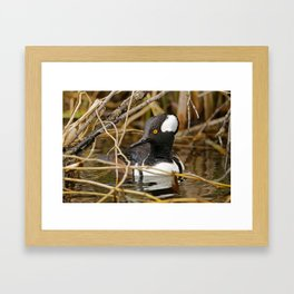Hooded Merganser | Wildlife Photography | Birds | Nature Framed Art Print