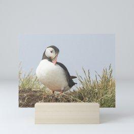 The shy puffin Mini Art Print