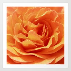 orange rose petals X Art Print