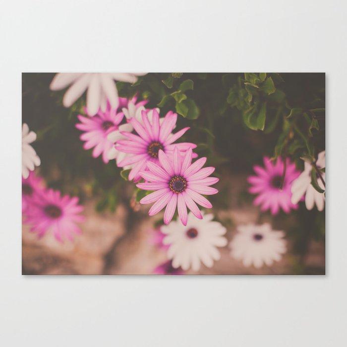 Hot Pink Daisies Canvas Print