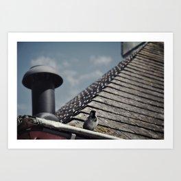 bird on a roof Art Print