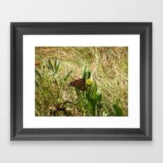 Butterfly at the Marsh Framed Art Print