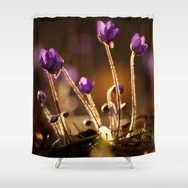 Hepaticas in The Glare Of The Sun #decor #society6 Shower Curtain
