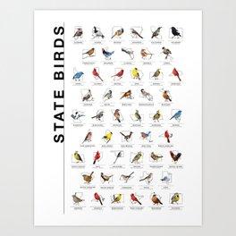50 State Birds (White) Art Print