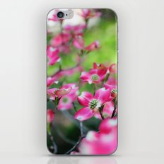 Pink Dogwood in the Spring iPhone & iPod Skin