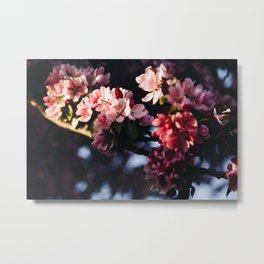 Photo of Cherry Blossom Flowers in Golden Hour in Amsterdam, the Netherlands   Fine Art Colorful Travel Photography   Metal Print