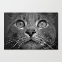 Wilfred Canvas Print