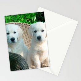 White Golden Retriever Dogs Sitting in Fiber Chair Stationery Cards