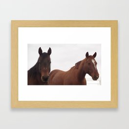 The Broodmares Framed Art Print