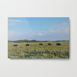 5 bison Metal Print