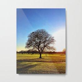 Tree - Malahide Park Metal Print
