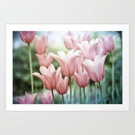 Lovely Tulips Art Print