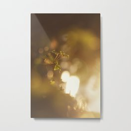 GOLDEN SUNLIGHT Metal Print
