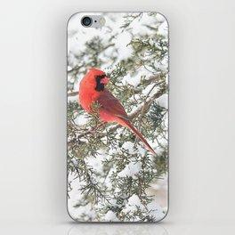 Cardinal on a Snowy Cedar Branch (sq) iPhone Skin