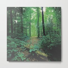 Forest Calm Metal Print