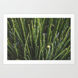 Nature's Bristles Art Print
