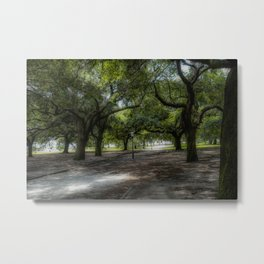 Live oaks at the Battery Metal Print