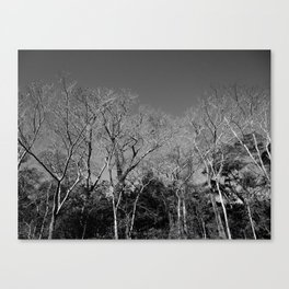 Dead Tree Florest Canvas Print