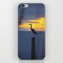 Blue Heron at Sunrise iPhone Skin